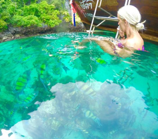 Boot umzingelt von bunten Fischen vor Ko Phi Phi