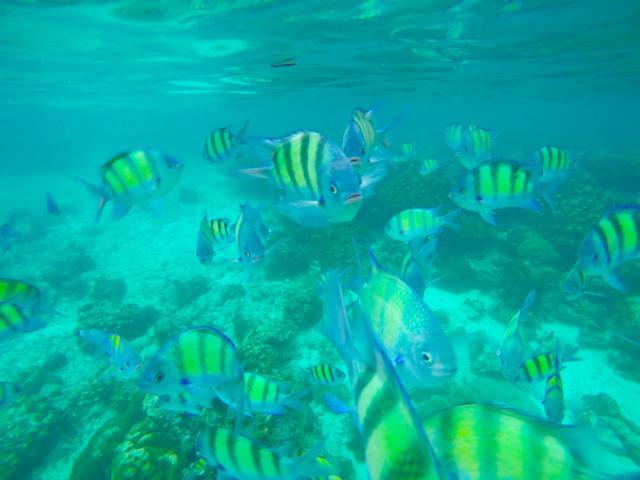 Bunte Fische Koh Phi Phi Thailand