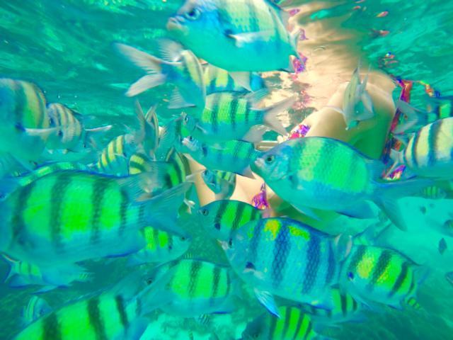Bunte Fische auf Koh Phi Phi