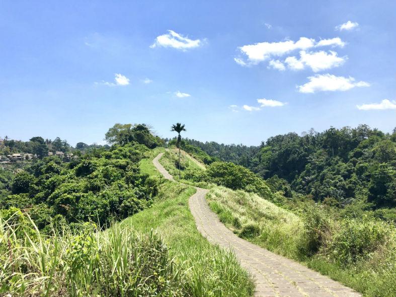 Weg durch Ubuds Natur