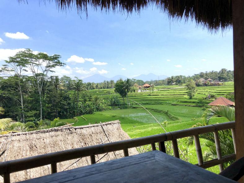 Aussicht auf Reisfelder in Ubud