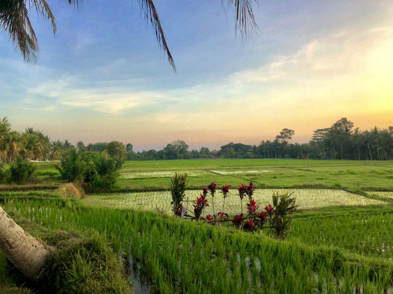 Sonnenuntergang Reisfeld Ubud