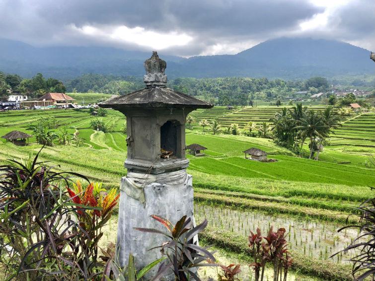 Bali Sehenswürdigkeiten, Aussicht auf grüne Reisfelder