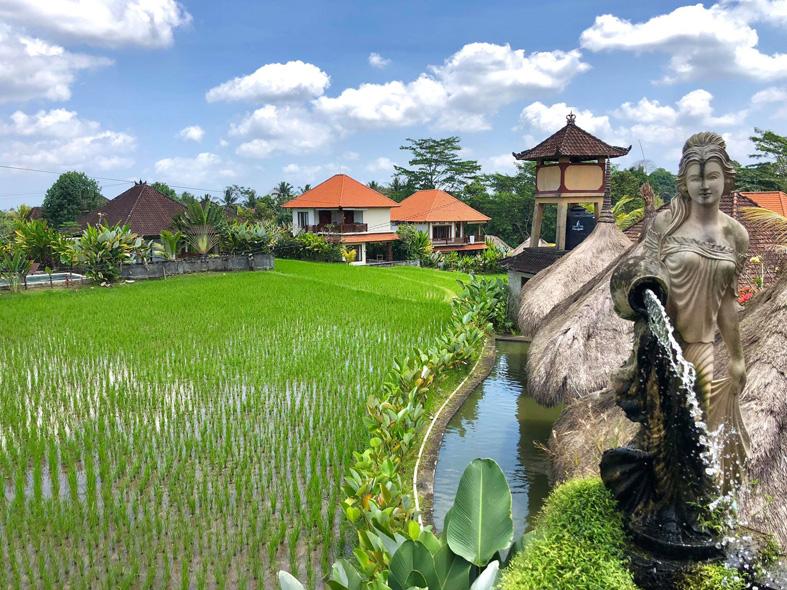 Reisfeld in Ubud auf Bali