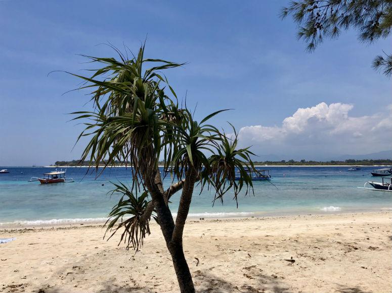 Palme am Strand auf Gili Trawangan