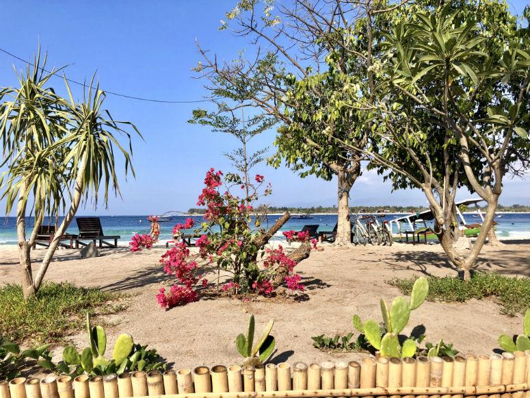 Planzen am Strand von Gili Trawangan