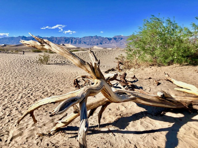 Baumstamm im Death Valley