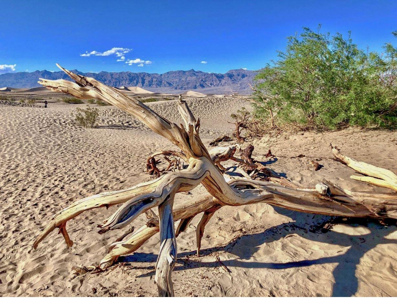 Death Valley, dürrer Ast in Wüste