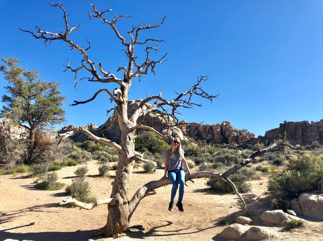 Joshua Tree Park USA, Frau sitzt auf Baum