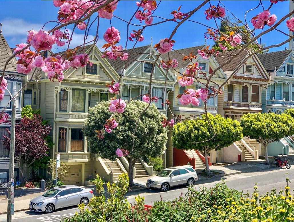 Painted Ladies, bunte Häuser mit Kirschblüten im Vordergrund