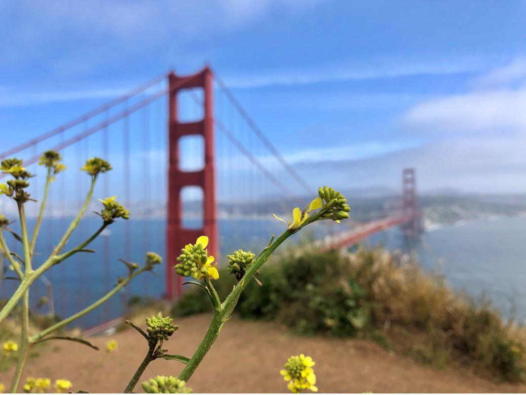 Ausblick auf die Golden Gate Brücke