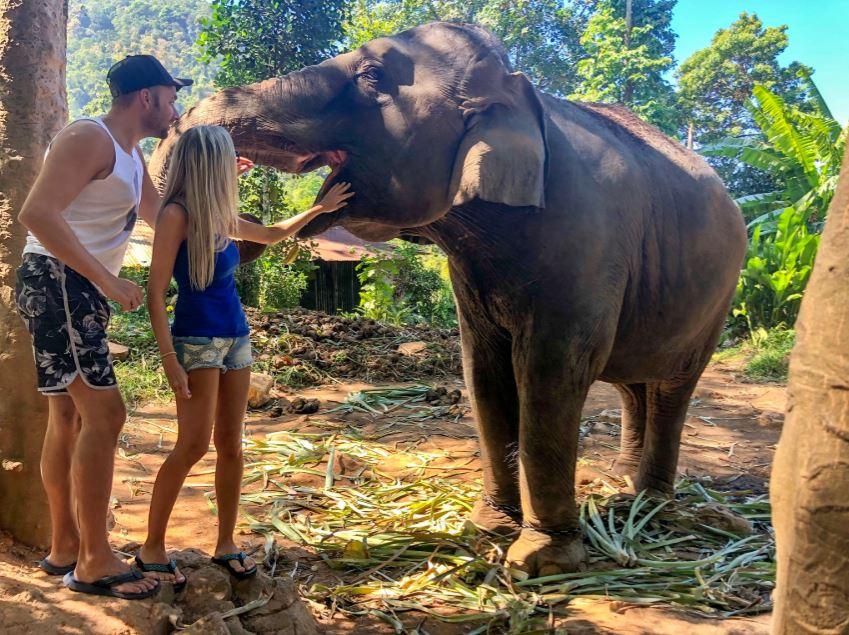 Elefanten auf Koh Chang, Elefant streckt Rüssel nach oben und wird von Pärchen gestreichelt